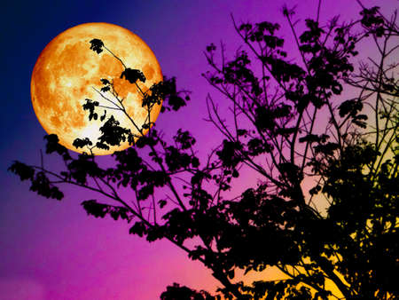 super blood moon back silhouette branch tree sunset Foto de archivo