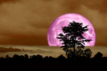 super full pink moon back over on silhouette tree in night sky
