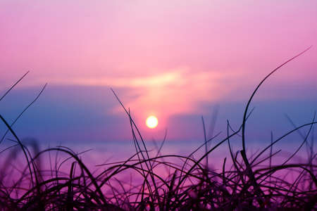 blur sunset on the sea and silhouette grass on beach colorful purple sky background