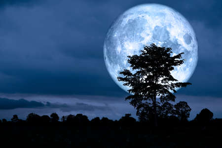 super moon back over on silhouette tree in night sky, Elements of this image furnished by NASA