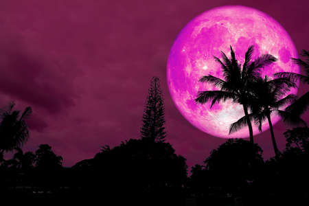 full pink moon over silhouette tree on forest