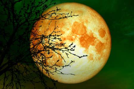 full blood moon near earth on night sky back silhouette dry branch tree