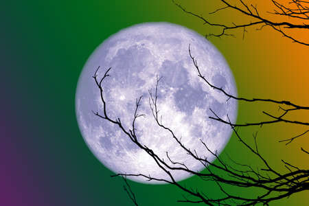 full blue moon back silhouette branch dry tree