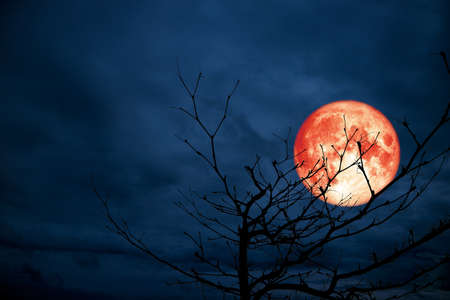red moon back silhouette branch dry tree night blue cloud
