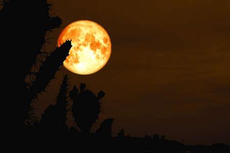 blood moon back silhouette cactus in desert land