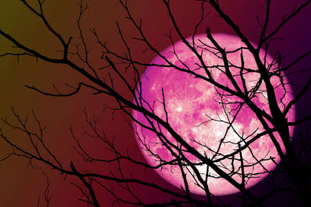 pink moon floats on the sky in the shadow of the hands of dried branches and leaves in the forest Stock Photo
