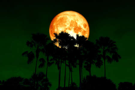 full blood moon back top silhouette high palms in dark night sky. 免版税图像