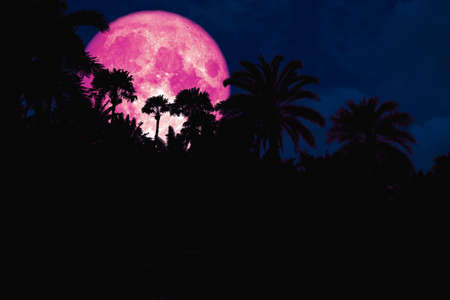 pink moon back silhouette in the ancient palm night sky