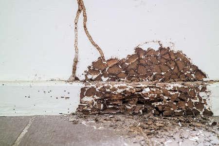 drewno wewnętrzne zostało uszkodzone przez termit, ponieważ ten obszar nie rozpyla chemikaliów w celu jego ochrony Zdjęcie Seryjne