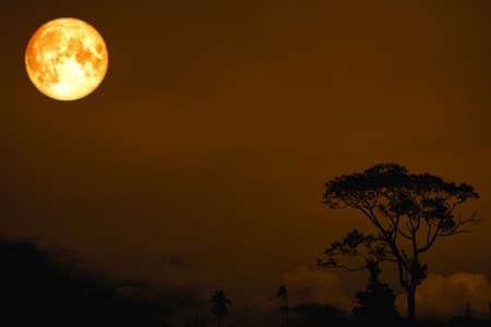 Pleine lune de sang sur l'arbre silhouette dans le champ sur le ciel nocturne