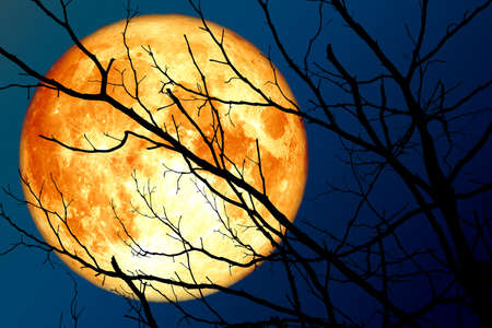 full blood moon floats on the sky in the shadow of the hands of dried branches, Elements of this image furnished by