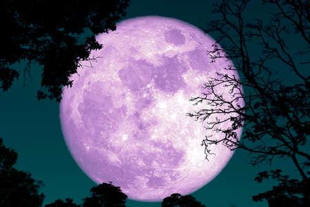 Luna de corteza llena en silueta de plantas y árboles en el cielo nocturno