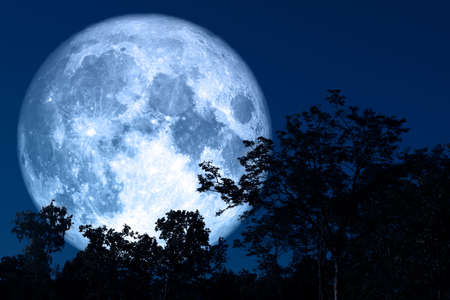 full sap moon back on silhouette plant and trees on night sky