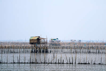 Mussel farm in the sea along the mangrove forest