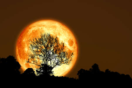 super corn planting moon back silhouette dry branch tree