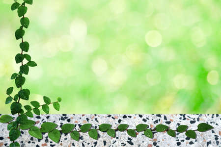 green leaves of Coatbuttons or  Mexican daisy nature border and blur bokeh terrazzo floor background