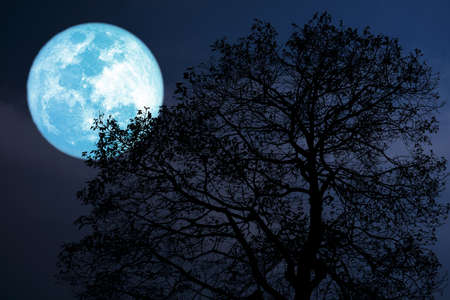 buck moon on night sky back over silhouette dark forest Stock Photo