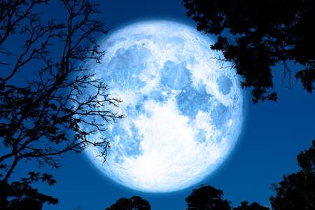 księżyc w pełni skorupy z powrotem na sylwetkę roślinę i drzewa na nocnym niebie Zdjęcie Seryjne