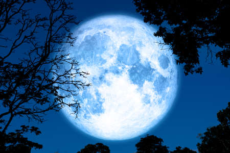 Vollkruste Mond zurück auf Silhouette Pflanze und Bäume am Nachthimmel Standard-Bild