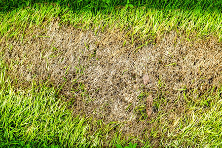 area of dry grass can not grow because something cover this and do not has sun light