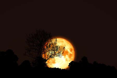 Full flower Moon back silhouette dry branch tree