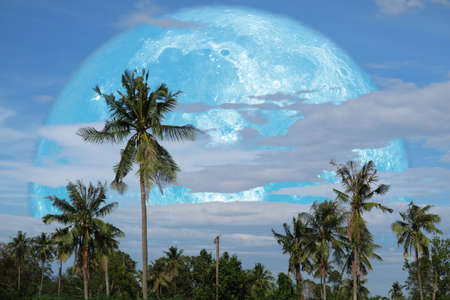 harvest moon on night sky back over silhouette coconut tree and cloud background 免版税图像