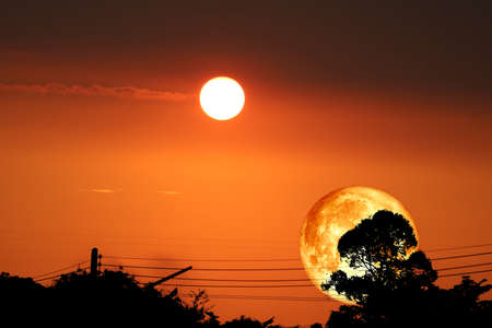 super dark harvest piurple moon on night sky back dry branch tree over forest and sunset Imagens