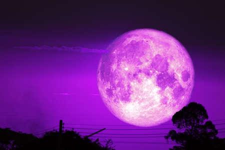 super dark harvest piurple moon on night sky back dry branch tree over forest Imagens