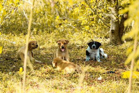 Stray puppies are playing under the bushes in landfill Imagens