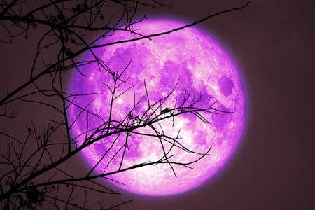 super dark harvest purple moon on night sky back dry branch tree in meadow