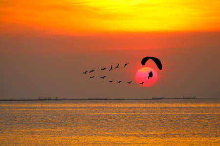 sunset flying birds and silhouette paramotor over sea and colorful red orange cloud on sky