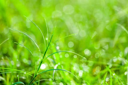 green grass in the garden and blokeh of water drop on leaves in field Imagens