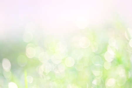 green white abstract blur colorful leaves flower tree in garden background Imagens