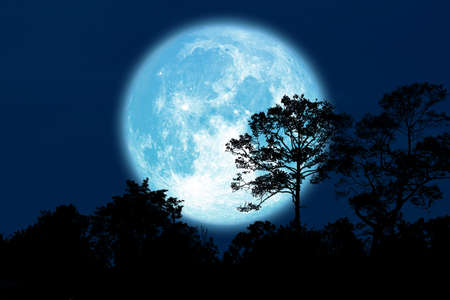 Full Buck Moon back silhouette trees in field Archivio Fotografico - 134349057