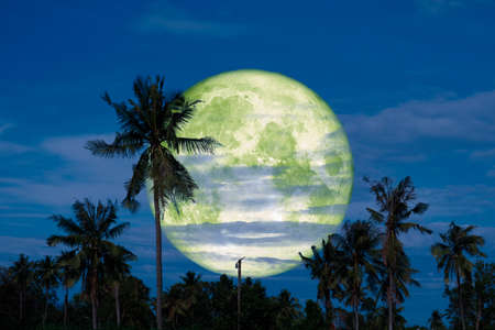 full cold moon back on coconut tree in the night sky