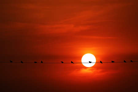 sunset back on silhouette dark red orange evening cloud on the sky and bird on power electric line