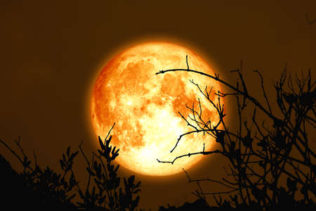full cold blood moon back on branch tree in the night sky
