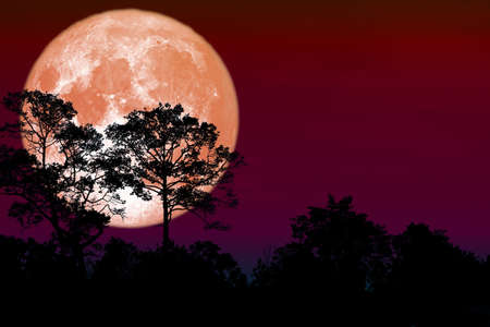 Full flower Moon back silhouette dry branch tree Archivio Fotografico - 134350221