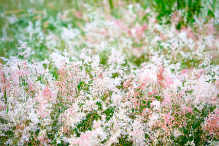 abstract blurred grass red and white flowers blooming in the field and green leaves background