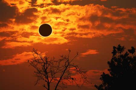 amazing phenomenon of total sun eclipse over silhouette cactus and desert tree sunset sky