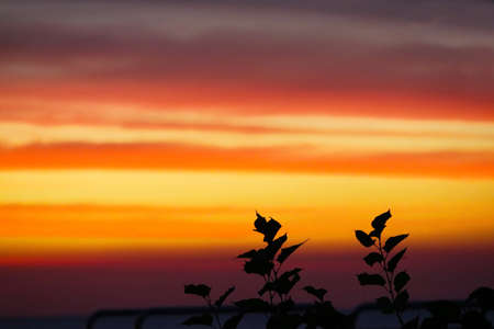 flame red orange yellow sky and happy new year text in sunset back silhouette plant