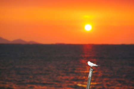 bird standing on bamboo on the sea and blur sunset background