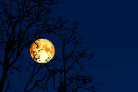 full worm moon back on silhouette plant and trees on night sky, Elements of this image furnished by