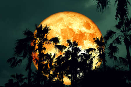 pink Full Hunger Moon on night sky back silhouette palm tree, Elements of this image furnish