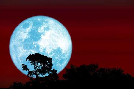 Full harvest blue moon and silhouette top tree on night red sky 版權商用圖片