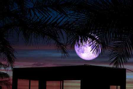 Full Worm Moon and silhouette tree on the roof and night sky