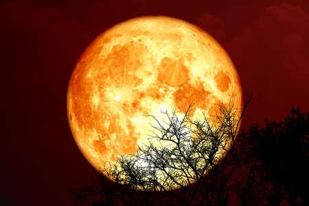 sturgeon blood moon and silhouette tree in the night sky 版權商用圖片