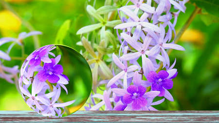 Reflection crystal ball of Puple Wreath is arranged as an ornamental plant with flowers with a vine trunk and branched into a large bush Indigo flowering branch tree 版權商用圖片