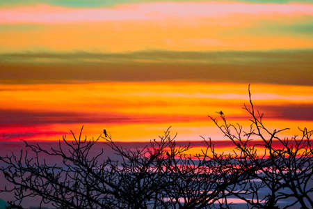 sunset back on silhouette birds hanging on dry tree colorful hot tone cloud on the sky 版權商用圖片