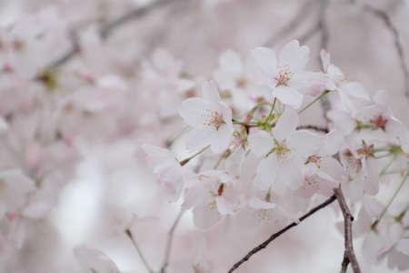 Blossom Burst